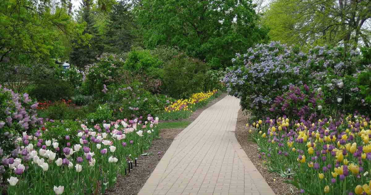 Lilacia Park path in springtime